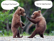 Fightingbears_2