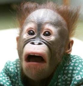 Shockedmonkey_cropped